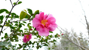 園芸総合センターの花々